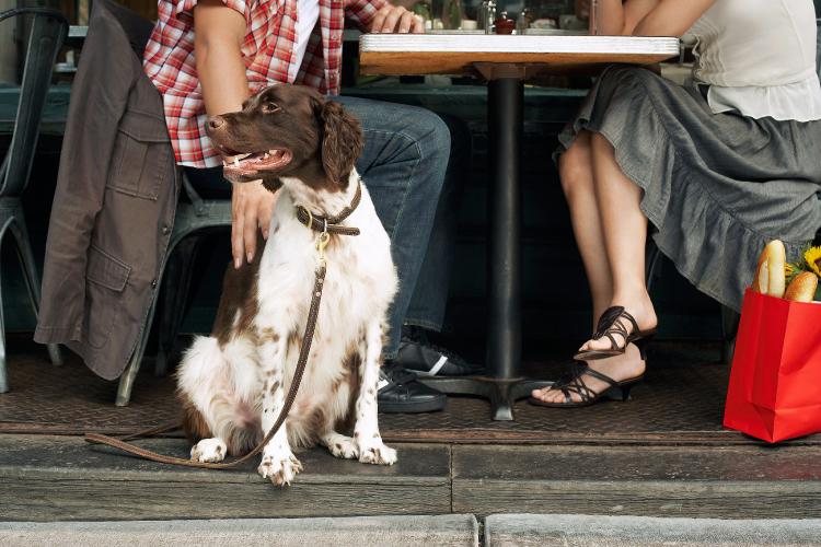 犬と食事できる法案が可決