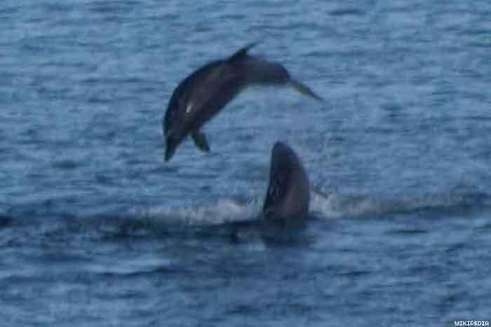 bottlenose_dolphinsx600