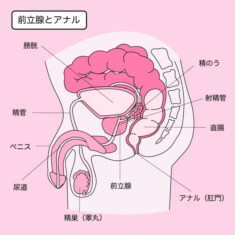 ゲイセックス 体位 日本